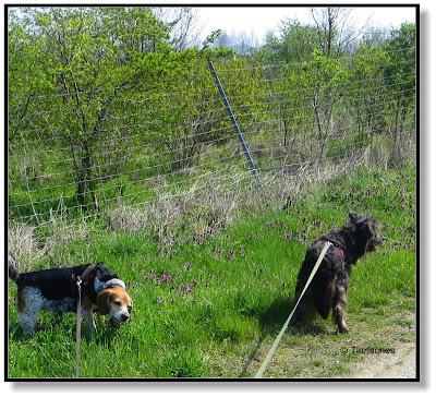 wenn der Hund Gras frisst