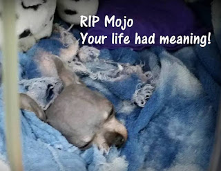 SAVING A DOG'S LIFE: Mojo's Mission