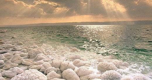 5200 Koleksi Gambar Binatang Laut Mati HD