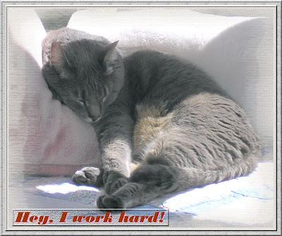 "Click image for my ""Not Just Another Cat Calendar!"" cat calendar!"