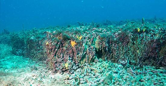 Perto da 'Ilha das Cobras em SP - descoberto Recife de Corais gigante e antigo