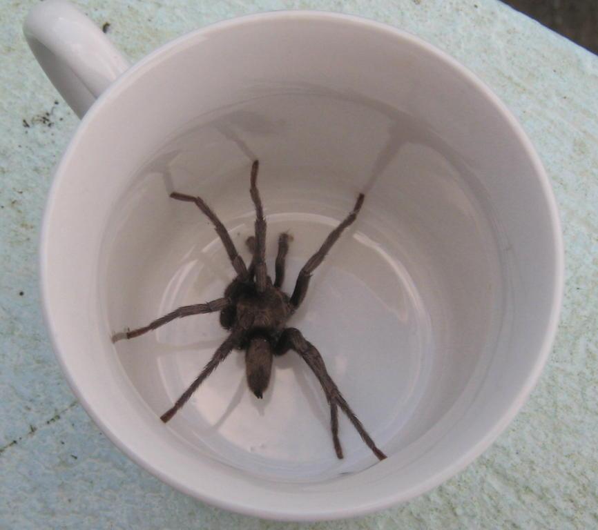 comment lutter et se débarrasser des araignées à la maison