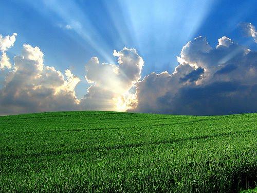 Agricultura Sustentável | Conceitos e Características
