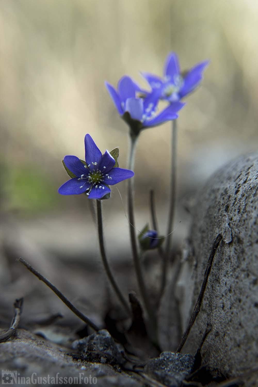 4c0d9ee16d61 Alla sju sorter - MinEden Trädgårdsblogg Puutarhablogi Gardenblog