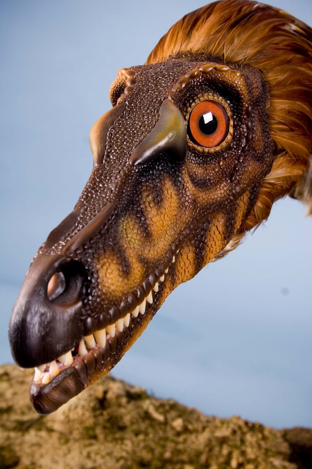 Art Evolved Life S Time Capsule Velociraptor