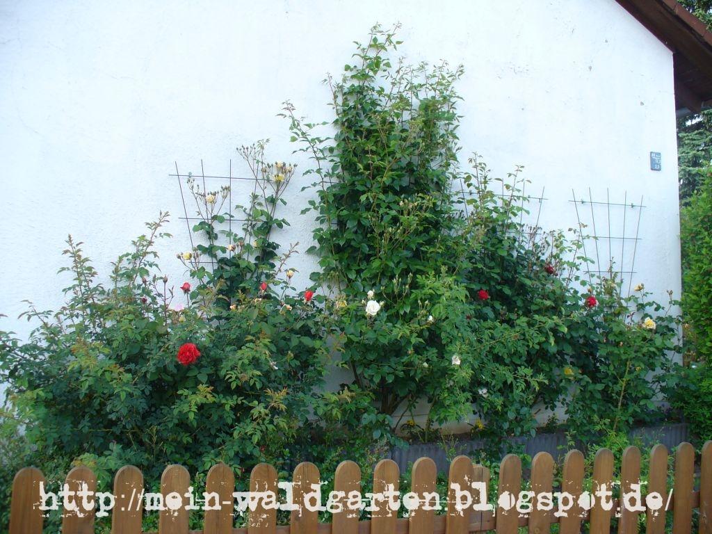 mein waldgarten am gartenzaun wie gestalte ich meinen. Black Bedroom Furniture Sets. Home Design Ideas