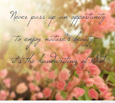 beautiful quotes on life with images:never pass up an opportunity to enjoy nature's