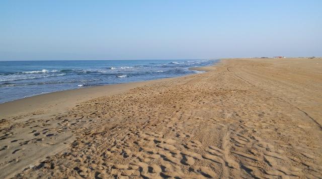 La platja de bon matí