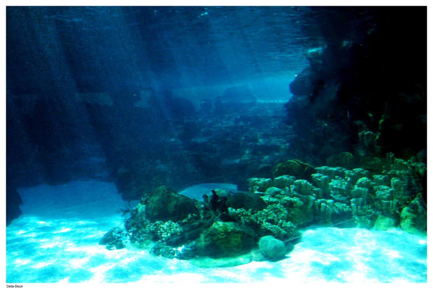 Underwater Ocean Floor Light Wallpaper Hd Desktop Wallpapers Beautiful