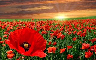الورود في العالم الحمراء