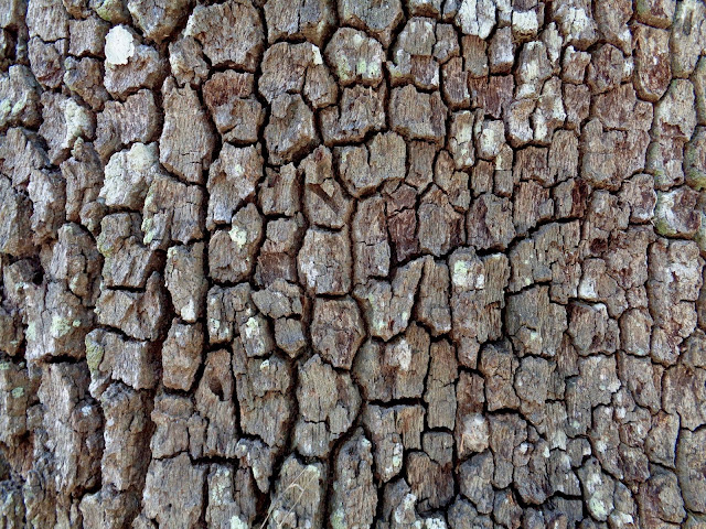 Tree bark at a park