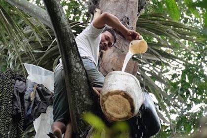Lowongan Group Perusahaan Perkebunan Dan Pabrik Kelapa Sawit Di Riau April 2019