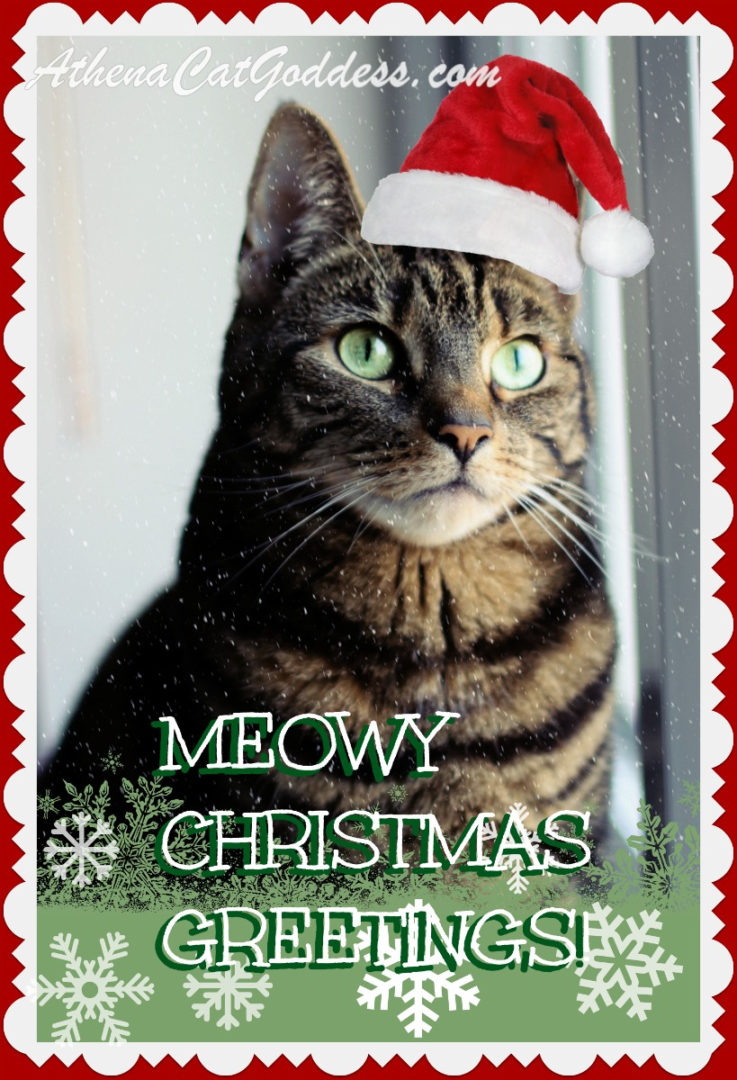 Happy Meowy Christmas!