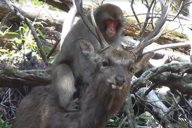 Maniak Seks, Monyet Tanzania Berhubungan dengan Spesies Berbeda