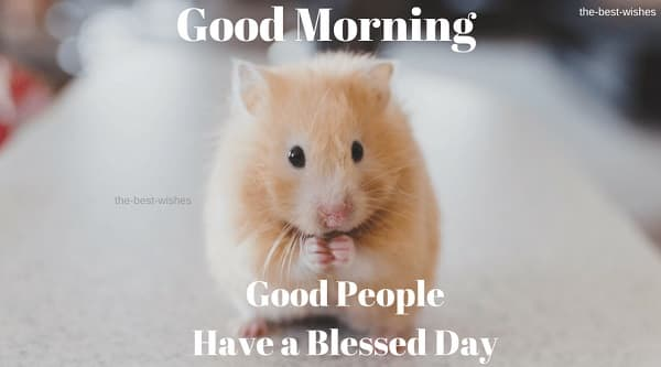Nice Good Morning meme for him with cute mouse images
