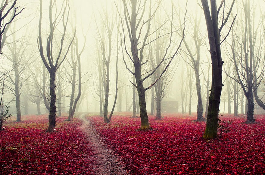 11. Somewhere Lovely In Italy - 22 Mysterious Forests I'd Love To Get Lost In