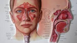 اعراض التهاب الجيوب الانفية عند الكبار وطرق علاجها