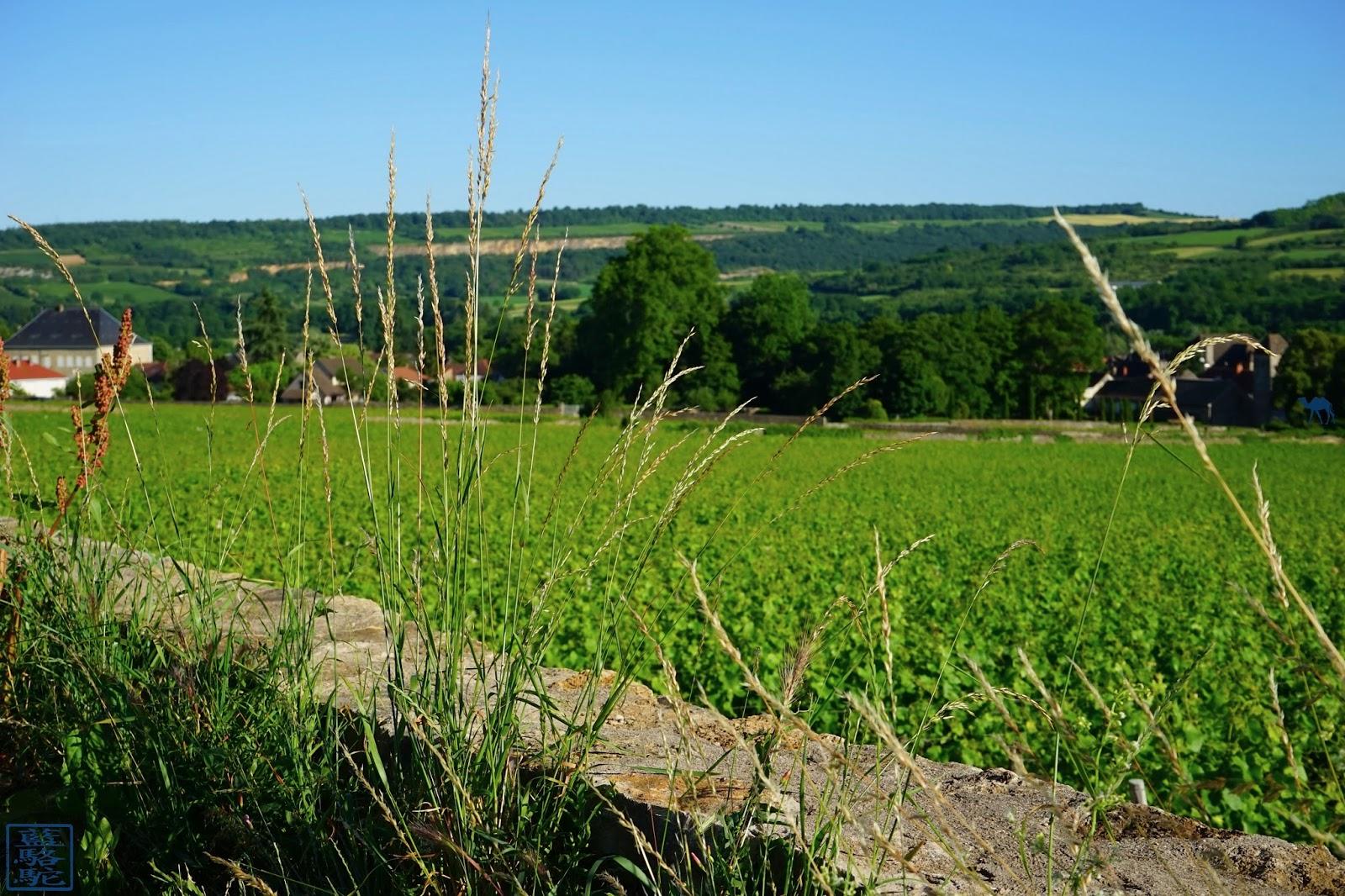 Le Chameau Bleu -  Balade dans les vignes de Santenay