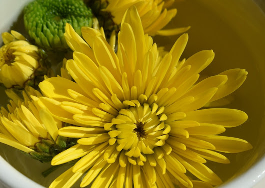 6 Great health benefits of drinking dandelion tea that can make your life better