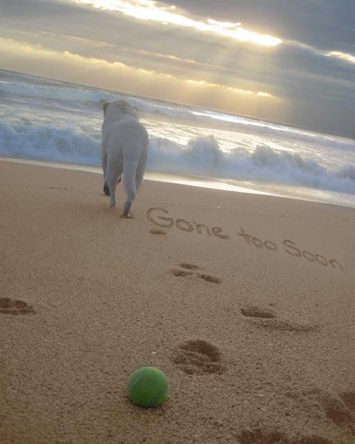 A dog walks away, gone too soon written in the sand