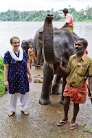 Kerala state animal: elephant