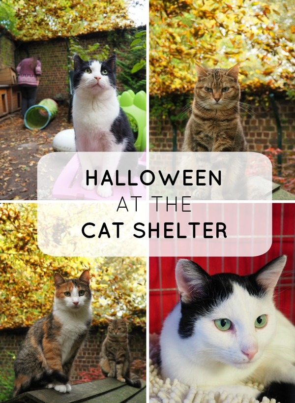 halloween at the cat shelter