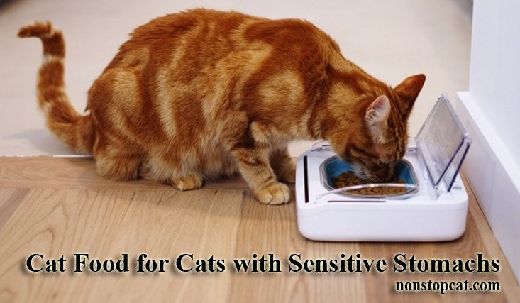 Cat Food for Cats with Sensitive Stomachs