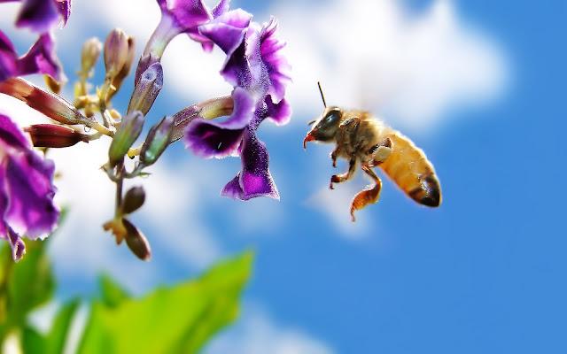Πωλείται μελισσοκομικός εξοπλισμός στο Αγρίνιο