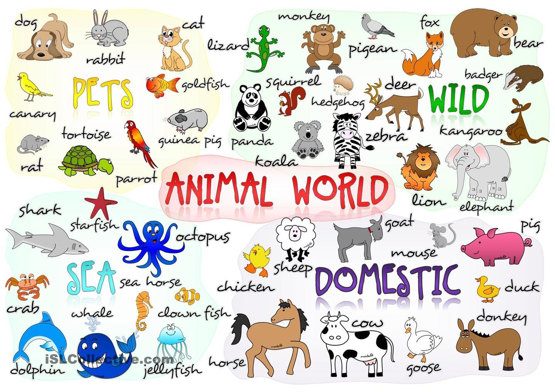 Blog Ingles Pio Baroja Let S Talk About Animals