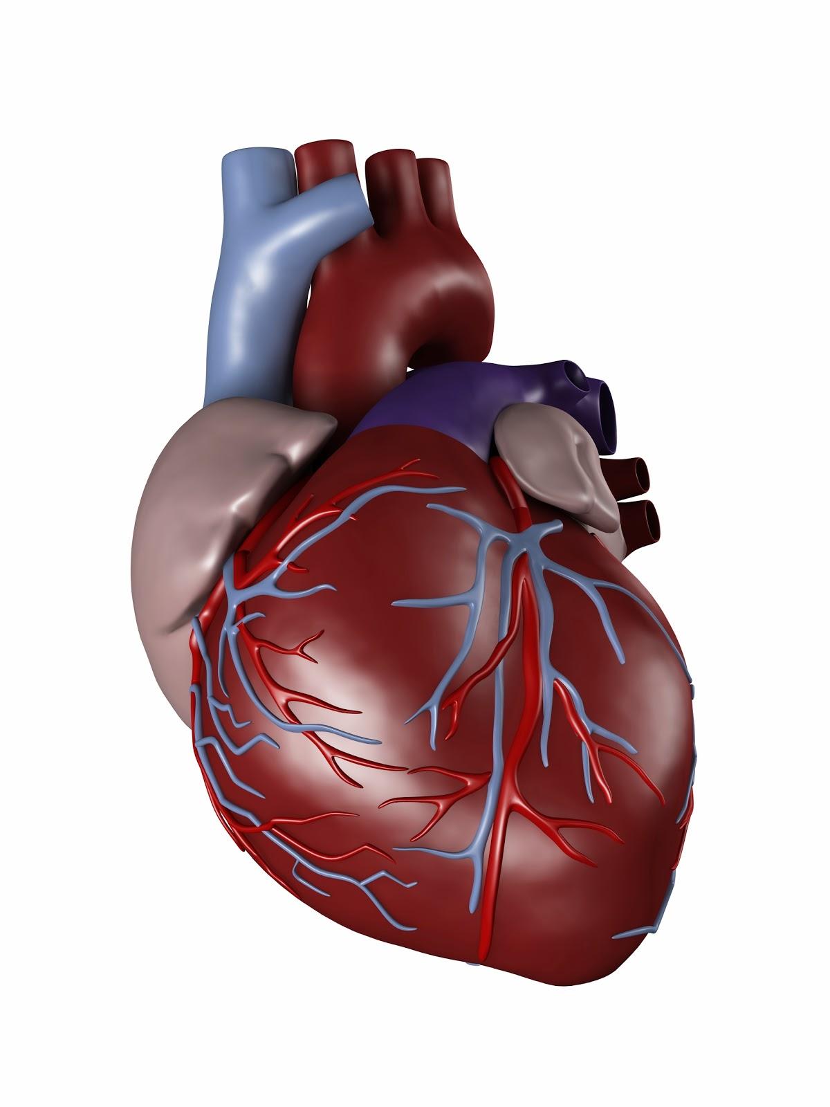 HEART/MOYO