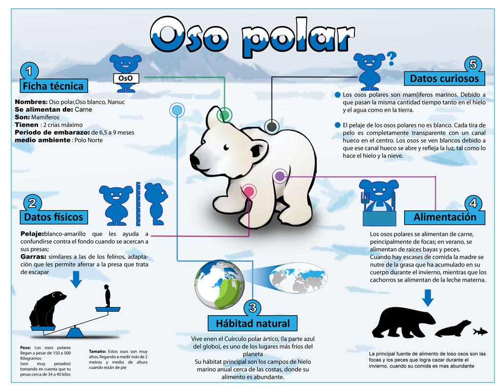 Oso polar en peligro de extincion yahoo dating 10