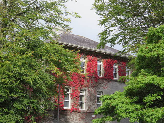 A Walking Tour of NUI Galway - Red Ivy