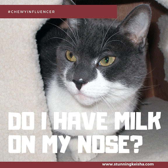 Do I Have Milk on My Nose? #ChewyInfluencer