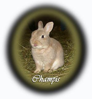 champis