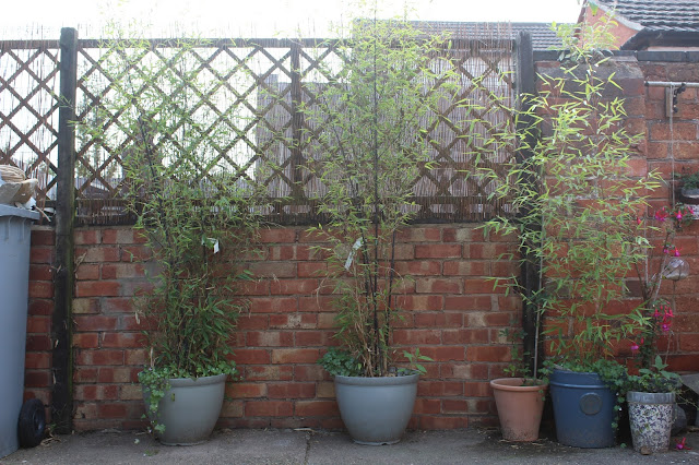 diy ideas for adding privacy to the garden