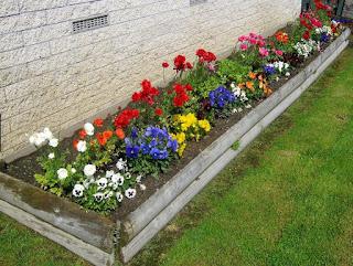 Flower Gardening Basics