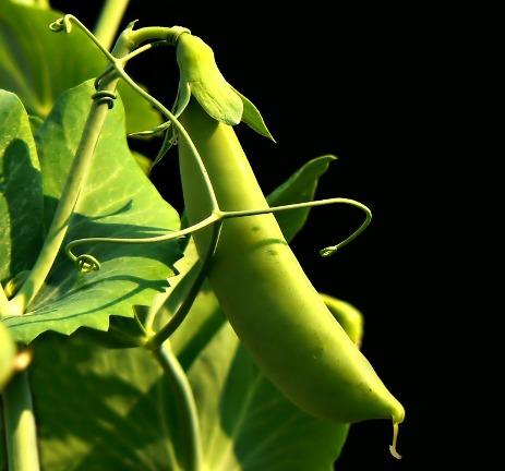 plants-my-list-mag