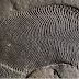 Extraordinary Evidence Suggests 558-Million-Year-Old Fossil Iѕ thе Oldest Knоwn Animal оn thе Planet
