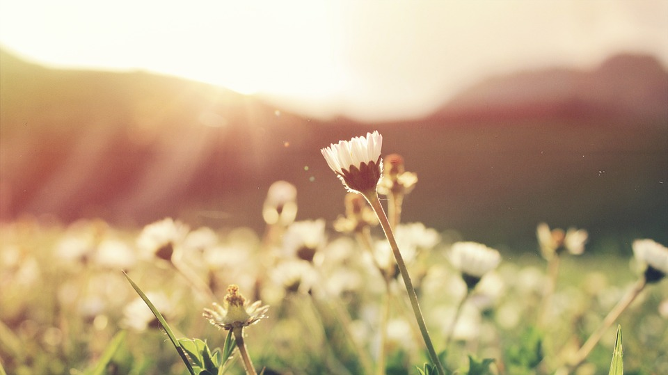 panorama fiori e luce