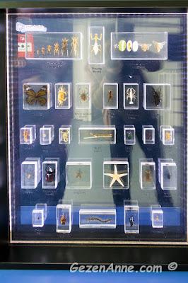 farklı böcekleri ve yaşam döngülerinin gösterildiği pano, Sancaktepe Bilim merkezi İstanbul