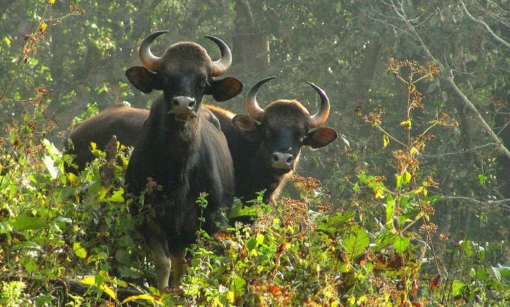 Neyyar Wildlife Sanctuary, Kerala