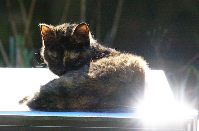 tortoise shell feral cat sleeps on top of a metal box