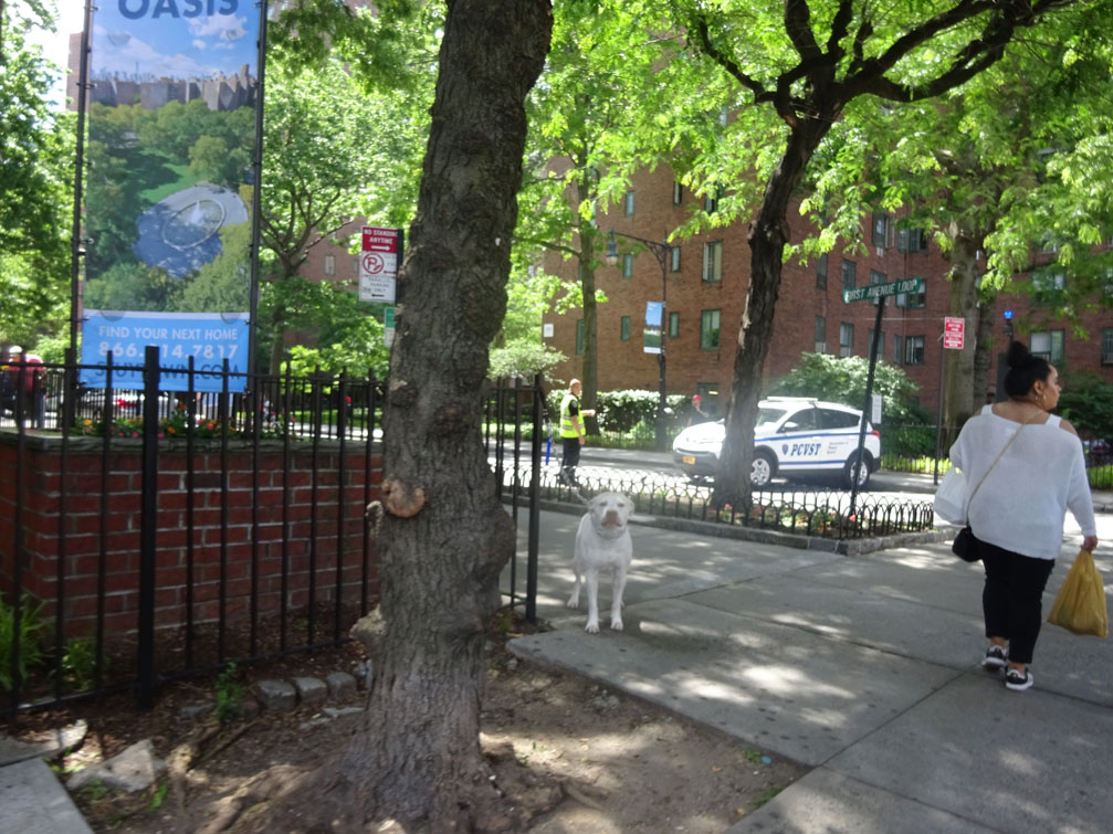 The stuyvesant town report life in stuyvesant town and for Cooper village