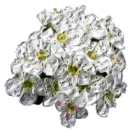 biancospino della Basilicata, foodfilebasilicata