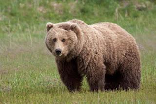 РИОСВ – Смолян провери четири сигнала за щети от мечка през март