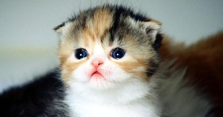Photo de chat chaton tout mignon - Chat tout mignon ...