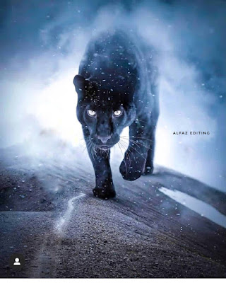 Vijay mahar black panther photo editing 2019Vijay mahar lion photo editing stock download| Vijay mahar runnig photo editing 2019