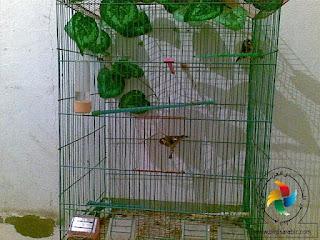 birdsarabic4
