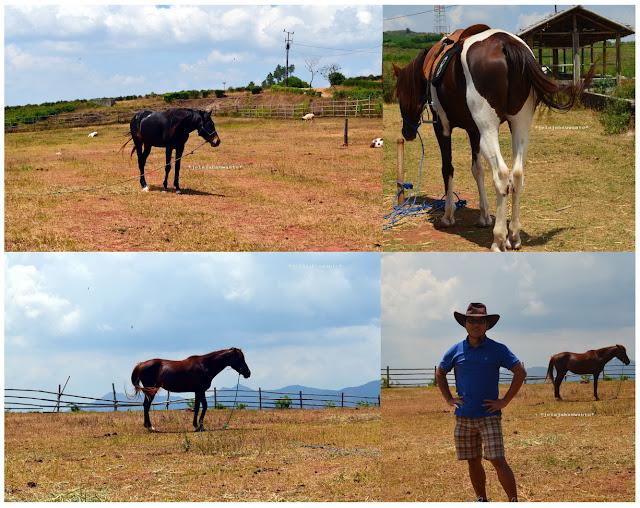 Kuda Malino Highland ||JelajahSuwanto