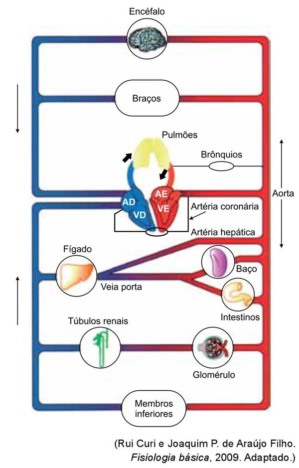 Fisiologia básica 2009